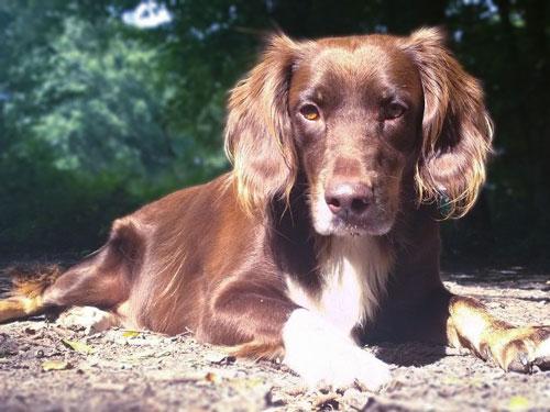 Balanced Dogs Rudelmitglied Elisha