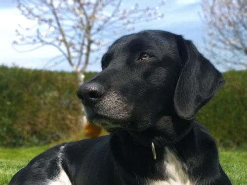 Balanced Dogs Rudelmitglied Sunny
