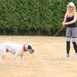 CHERI LUCAS Dog Psychology Seminar Germany
